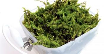 Moss power