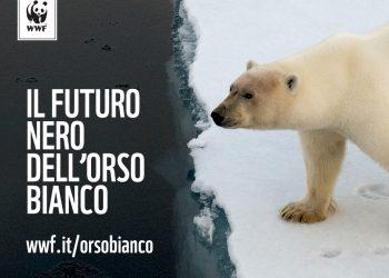 Il futuro dell'orso bianco