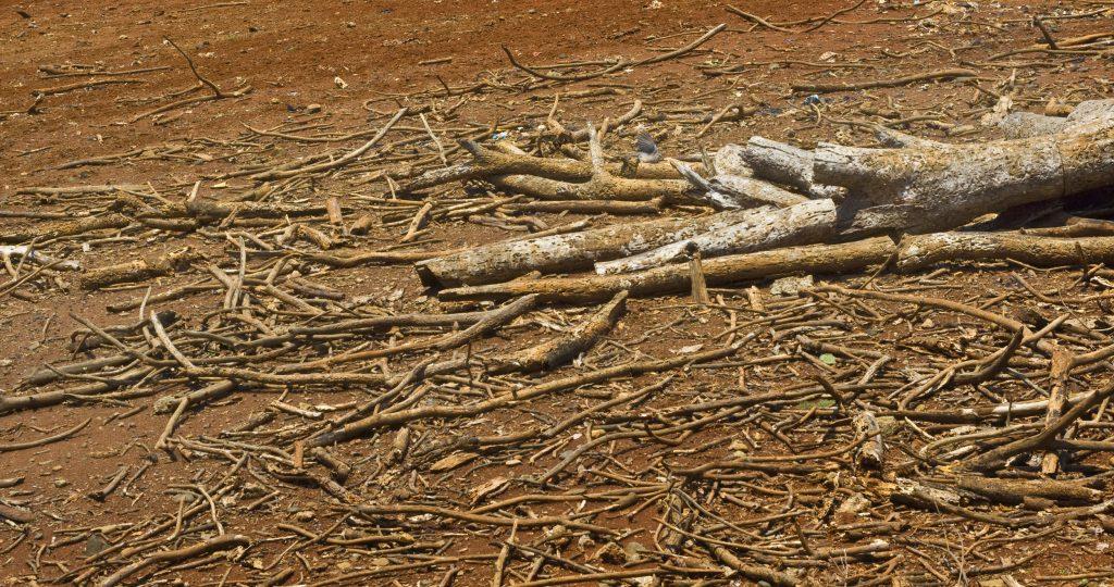 I drammatici effetti della siccità