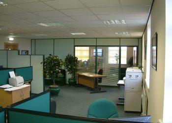 Tenere una pianta in ufficio: quale scegliere?