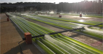 Biodiesel dalle alghe