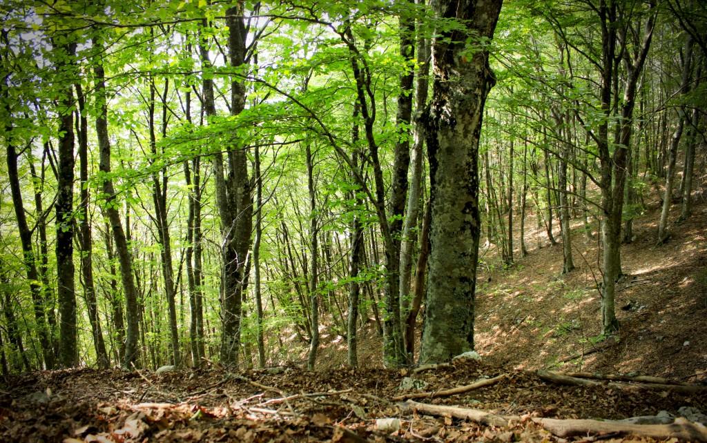 Google presenta il Global Forest Watch