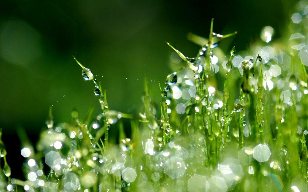 Dell'erba bagnata