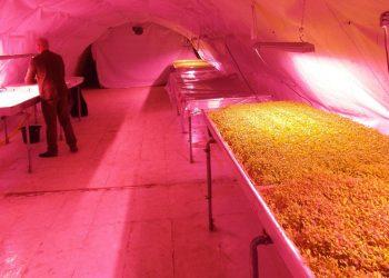 Growing Underground a Londra