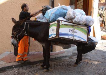 Un asino al lavoro a Castelbuono