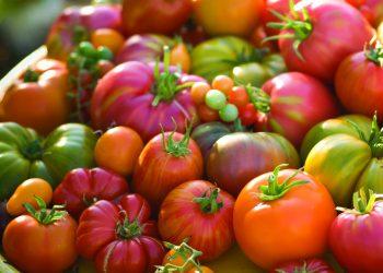 Pomodori di varie tipologie