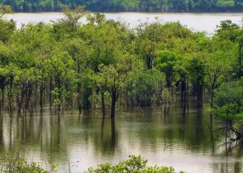 Uno scorcio del Rio delle Amazzoni, in Brasile