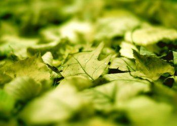 Foglie verdi a terra