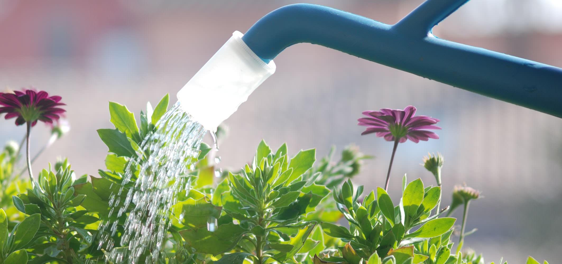 Come annaffiare al meglio le piante di casa for Annaffiare le piante