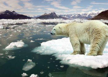 Un orso polare alle prese con il surriscaldamento globale (foto: criticalshadows.com)