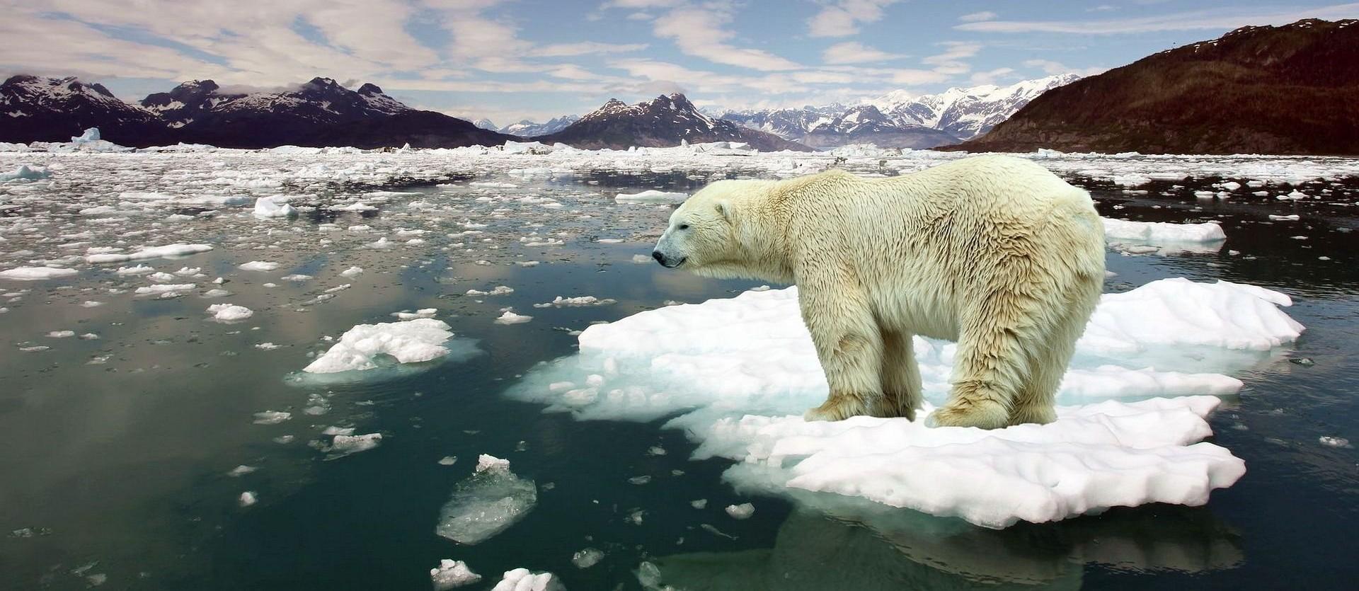 Risultati immagini per orsi polari cambiamenti climatici