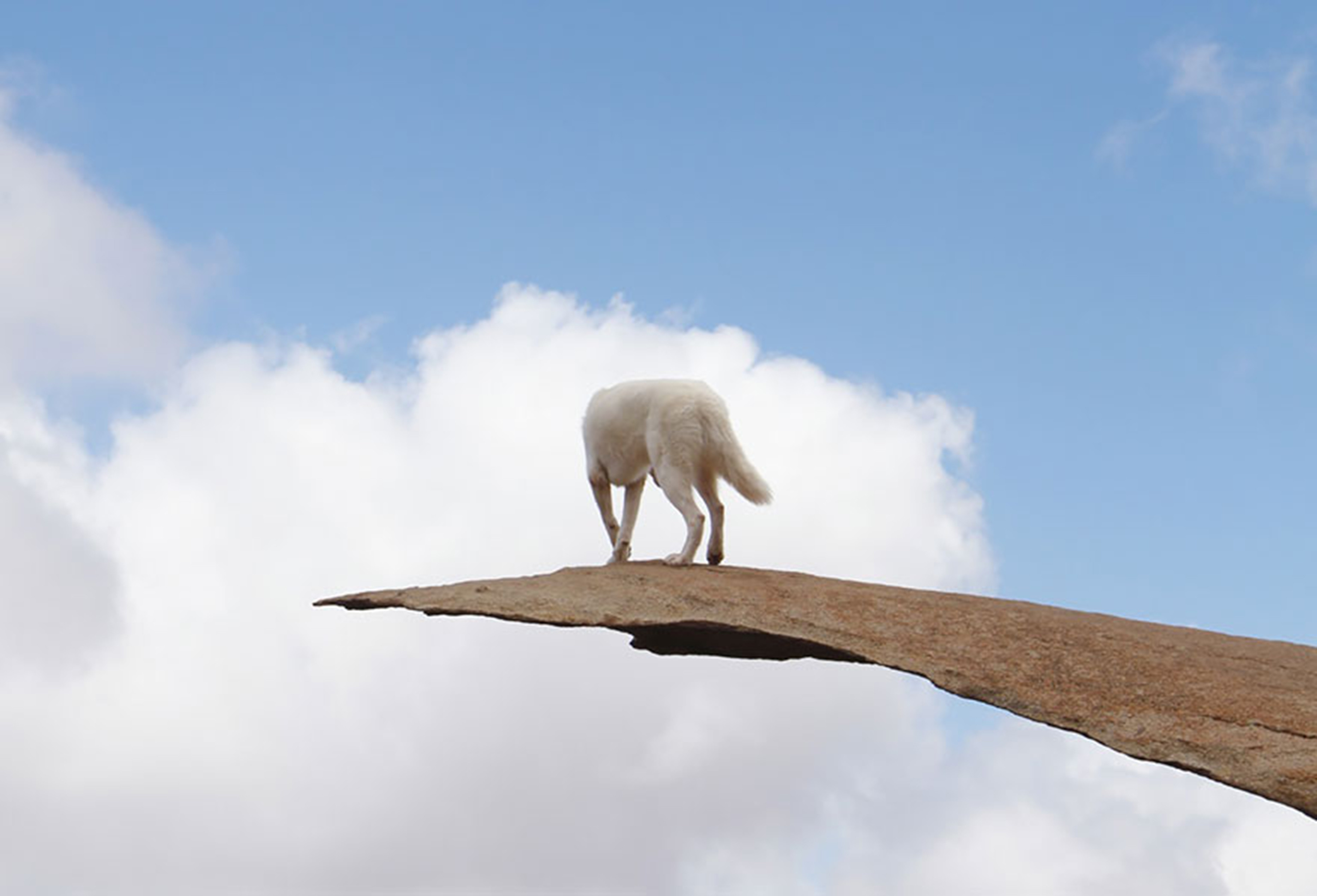 Il cane Wolfgang immortalato negli scatti di John Stortz