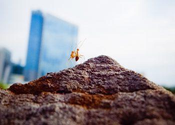 Due insetti in una città (foto: freeimages)