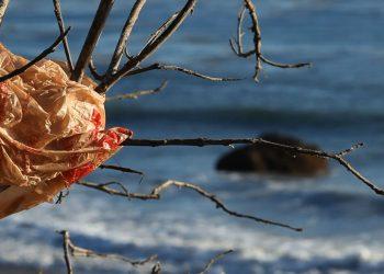 Un sacchetto di plastica impigliato a un albero (foto: http://www.consumovirtuoso.it/)