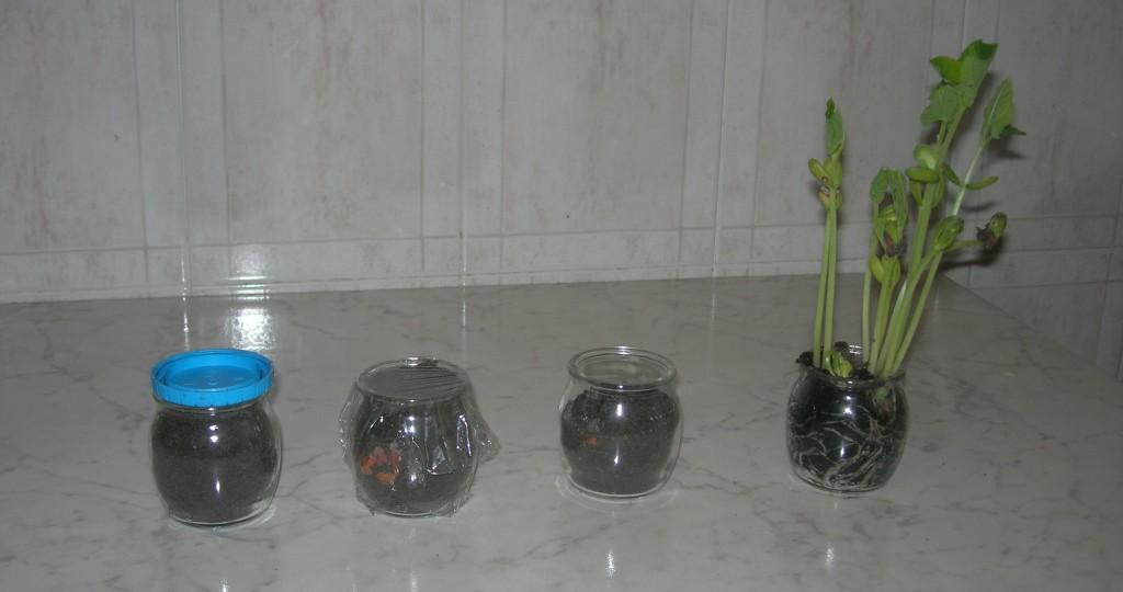 Piante coltivate nei vasetti di vetro. Foto: http://www.blogmamma.it/