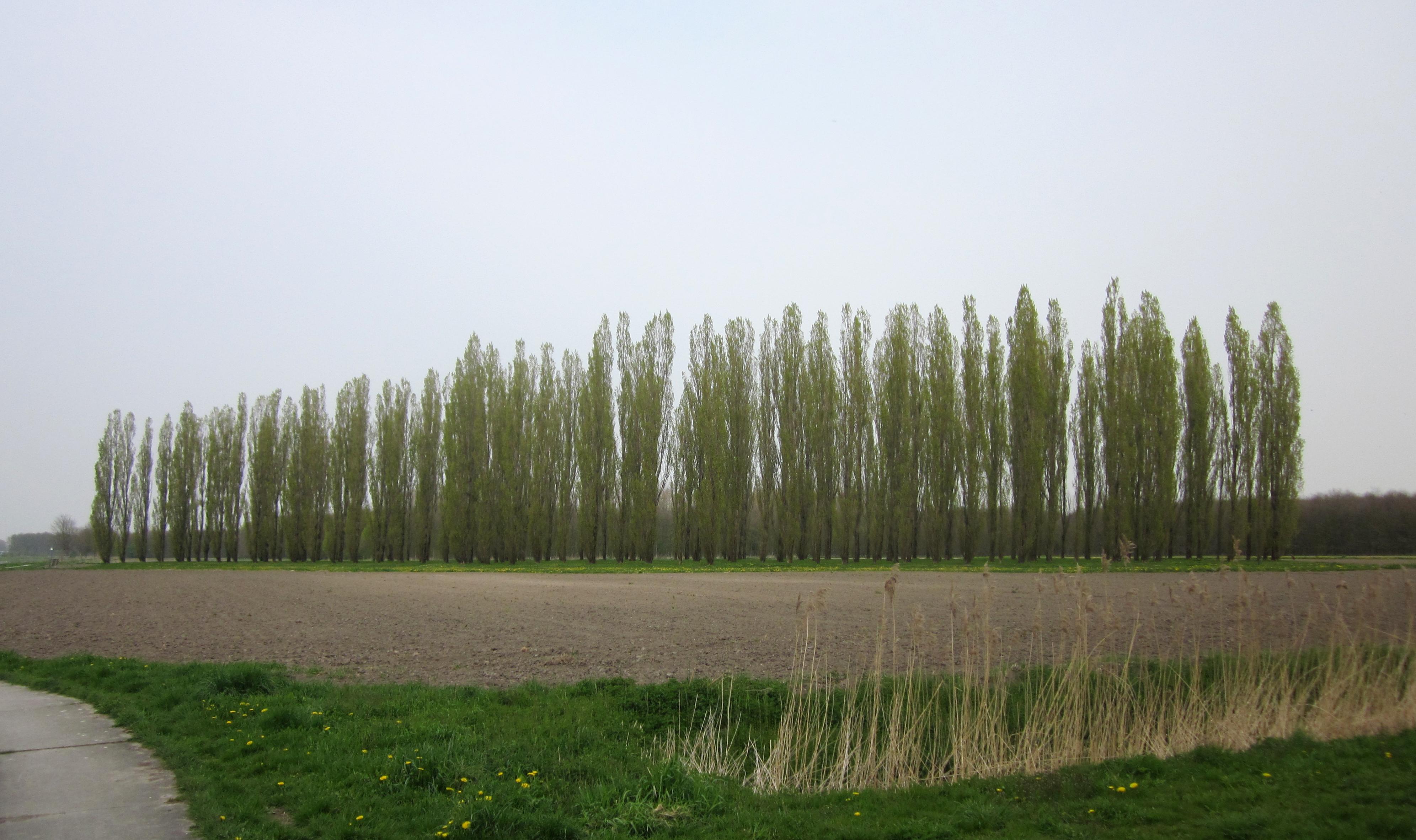 La cattedrale giardino dei paesi bassi - Alberi bassi da giardino ...