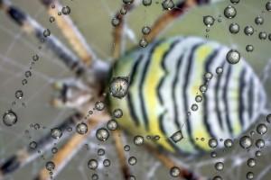 Il micromondo fotografato da Alberto Ghizzi Panizza