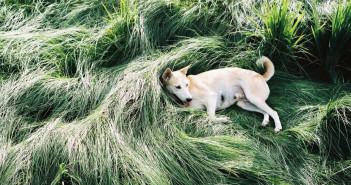Gluta, il cane più felice del mondo