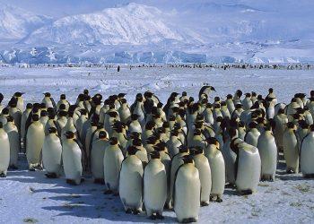 Un gruppo di Pinguini in Antartide (foto: http://xn--80aqafcrtq.cc/)