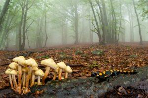 Atmosfere d'autunno - Marco Bertolini - 3° Micromondo