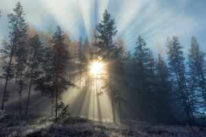 Gli effetti della luce - Matteo Pegoretti - 3° Mondo vegetale