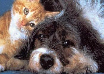 Un cane e un gatto (foto: comefare.com)