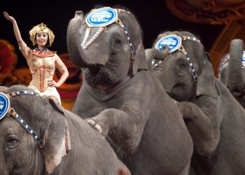 Elefanti in un circo britannico (foto: www.ibtimes.co.uk)