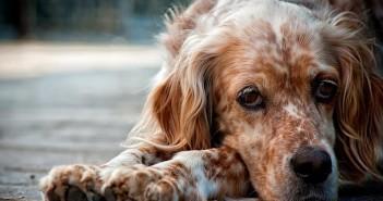 Un cane (foto: www.blog.bepuppy.com)