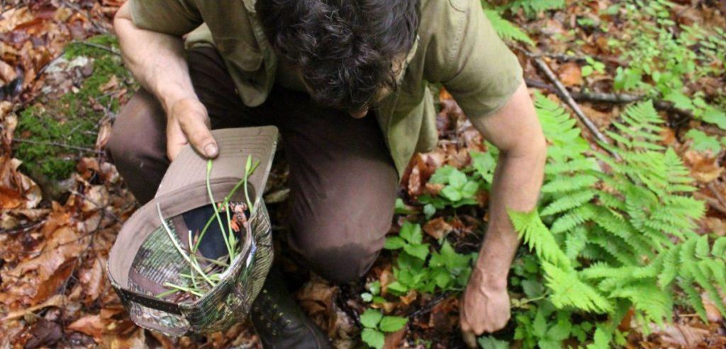 Un appassionato di foraging (foto: businessinsider.com)