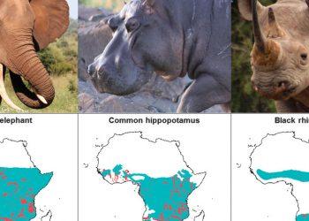 Elefanti, ippopotami e rinoceronti africani sono alcune delle specie a rischio estinzione