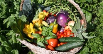Frutti della terra (foto: www.arezzometeo.com)