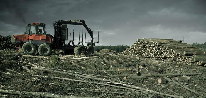 Un'area deforestata (foto: www.3bmeteo.com)