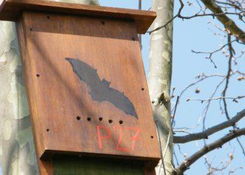 Una casetta per pipistrelli (foto: faunaviva.wordpress.com)