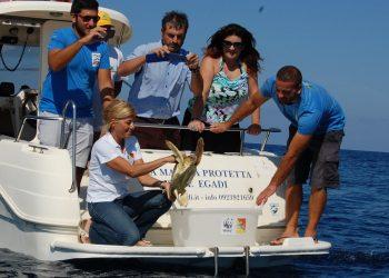 Un tartaruga liberata in mare dopo essere stata soccorsa (foto: http://www.alpauno.com/)