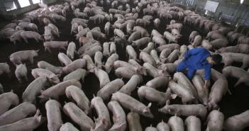 Un allevamento intensivo di animali (foto: http://www.slowfood.com/)