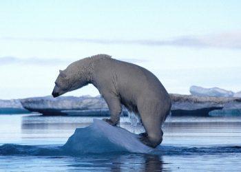 Un orso bianco su un piccolo iceberg (foto: www.huffingtonpost.it)