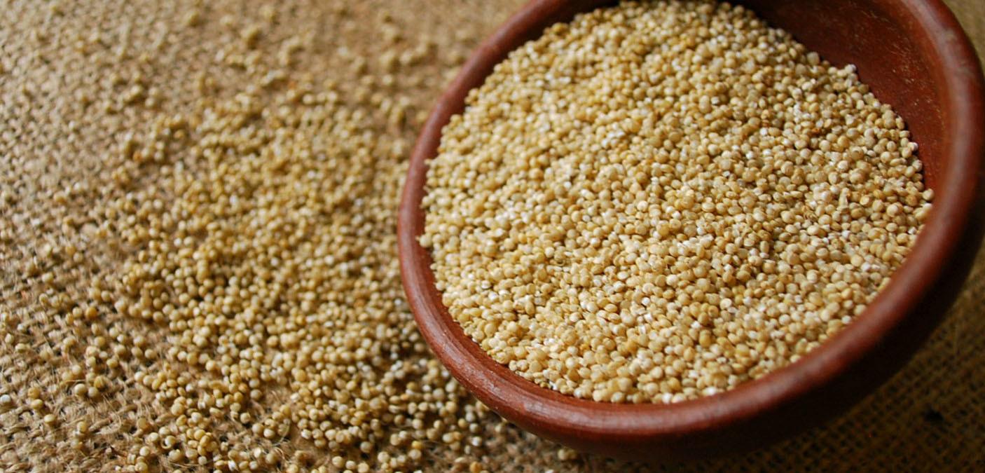Cos'è la Quinoa, perché fa bene e come si cucina - Green.it