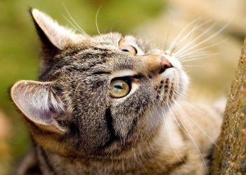 Un gatto che caccia (foto: www.wallpaperart.altervista.org)