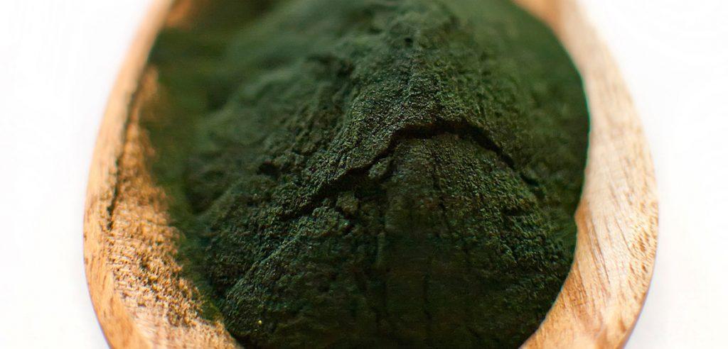 Polvere di alga Spirulina (foto: www.organicburst.com)