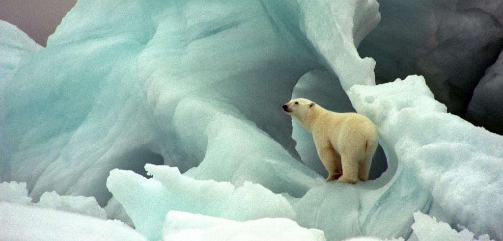 Un orso fra i ghiacci norvegesi (foto: http://awsassets.wwfit.panda.org/)