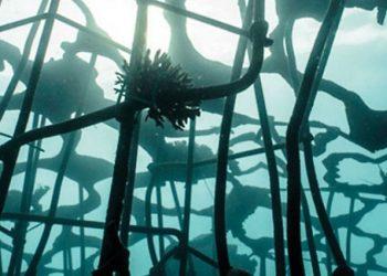 La barriera corallina artificiale (foto: http://teguhostenrik.com/wp-content/uploads/2013/07/ARTificial-REEF-Lombok-May2014-069.jpg)