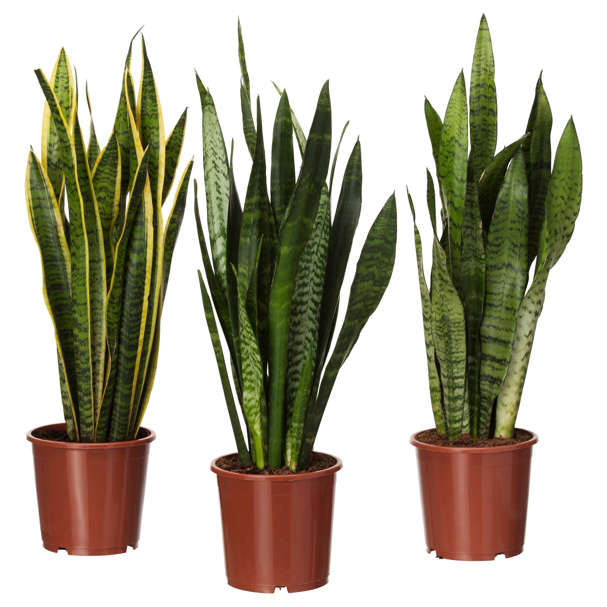 le 7 piante che aiutano a depurare la casa