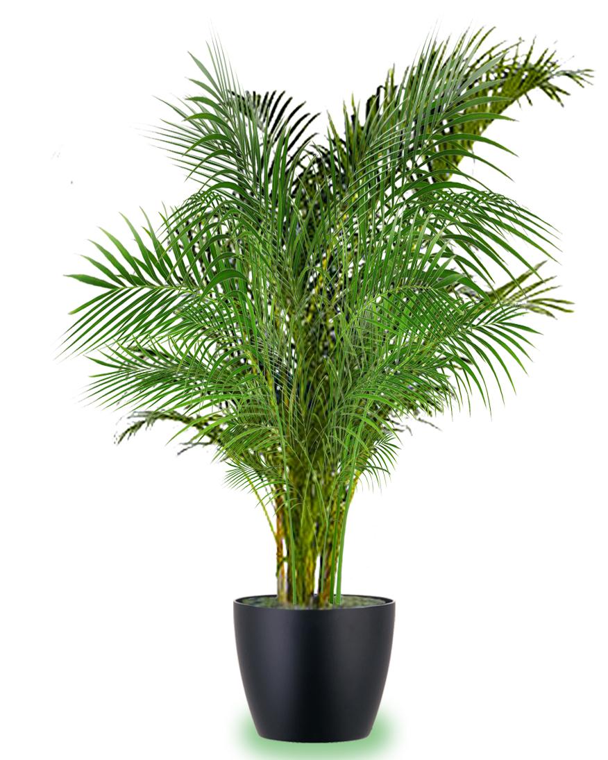 Piante Da Appartamento Bambu.Le 7 Piante Che Aiutano A Depurare La Casa Green It