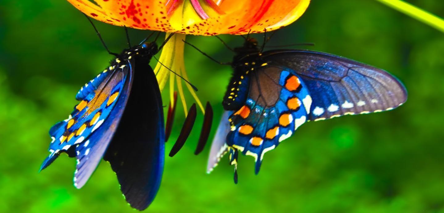 Belle e astute ecco perch le farfalle sono cos colorate for Sfondi con farfalle