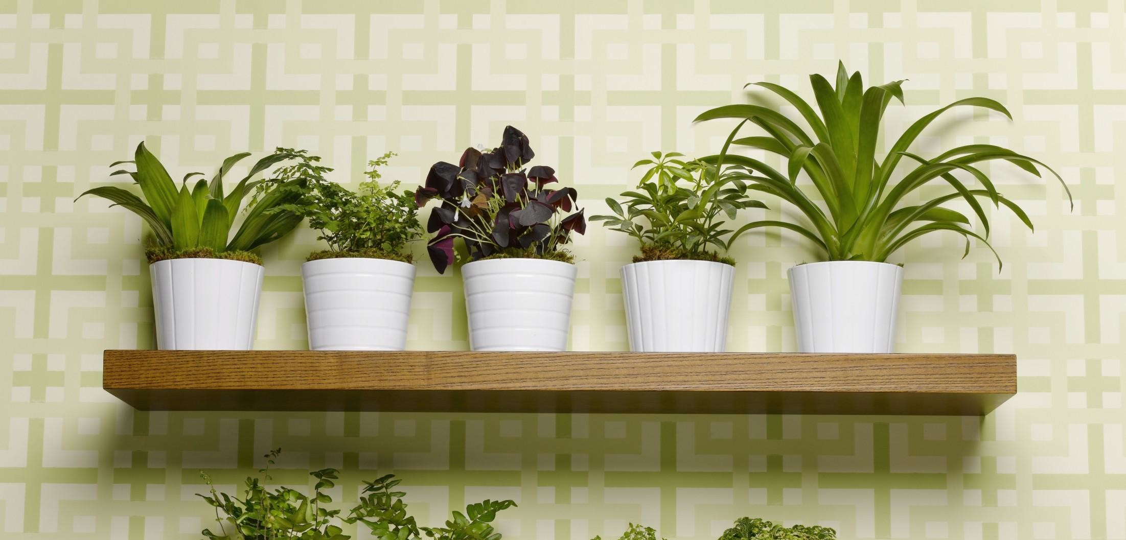 Piante Eleganti Da Appartamento le 7 piante che aiutano a depurare la casa - green.it