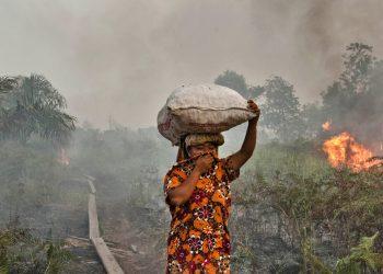 Una foresta indonesiana in fiamme (foto: www.lifegate.it)
