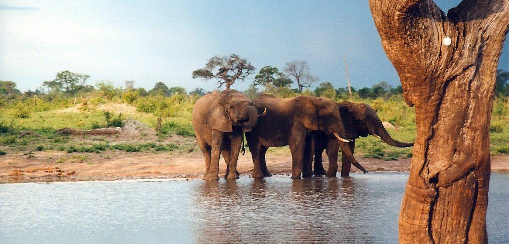 Elefanti nel parco Hwange