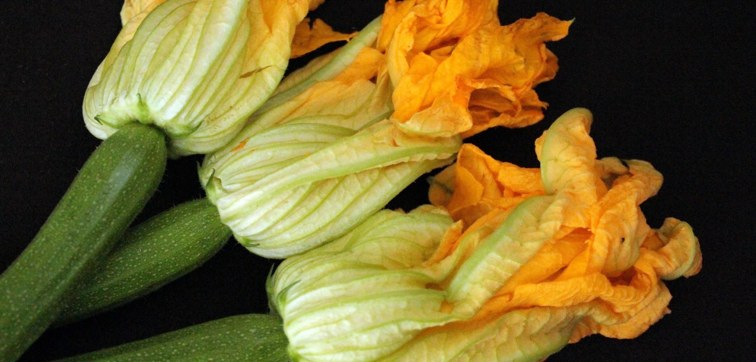 Risultati immagini per fiori di zucca