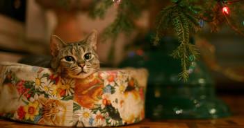 gatto-albero-di-natale