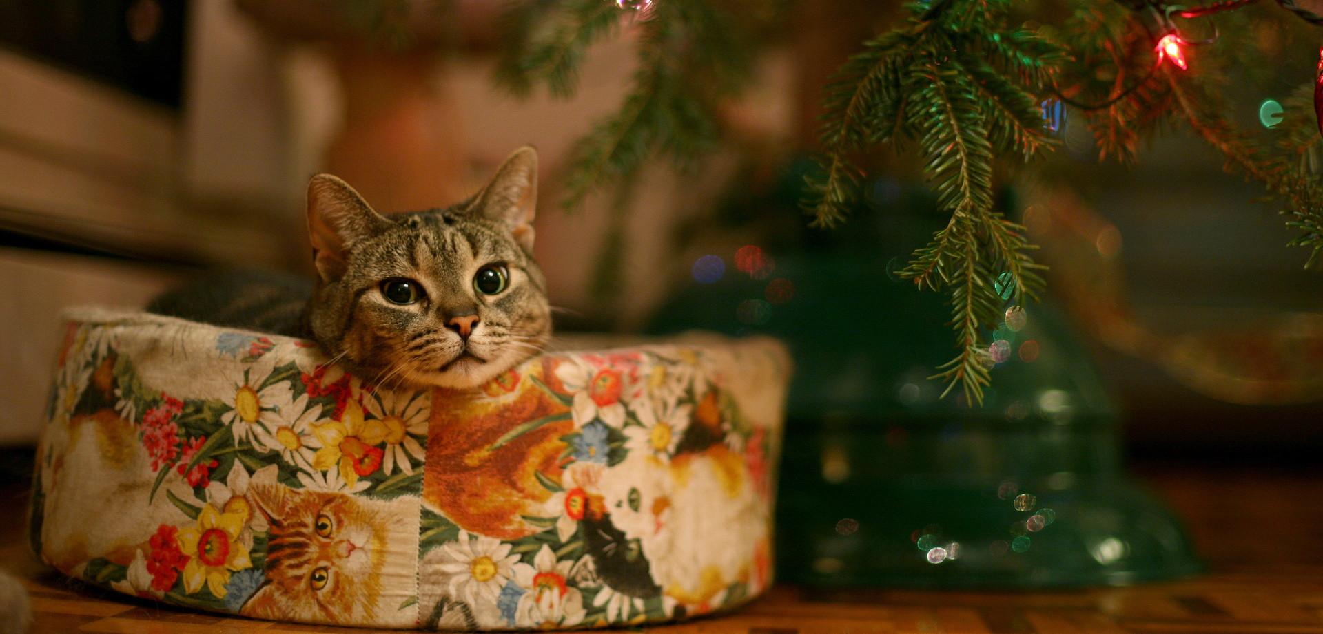 La Guida Definitiva Per Un Albero Di Natale A Prova Di Gatto Greenit
